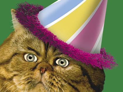 Порноонлайн kitty cat