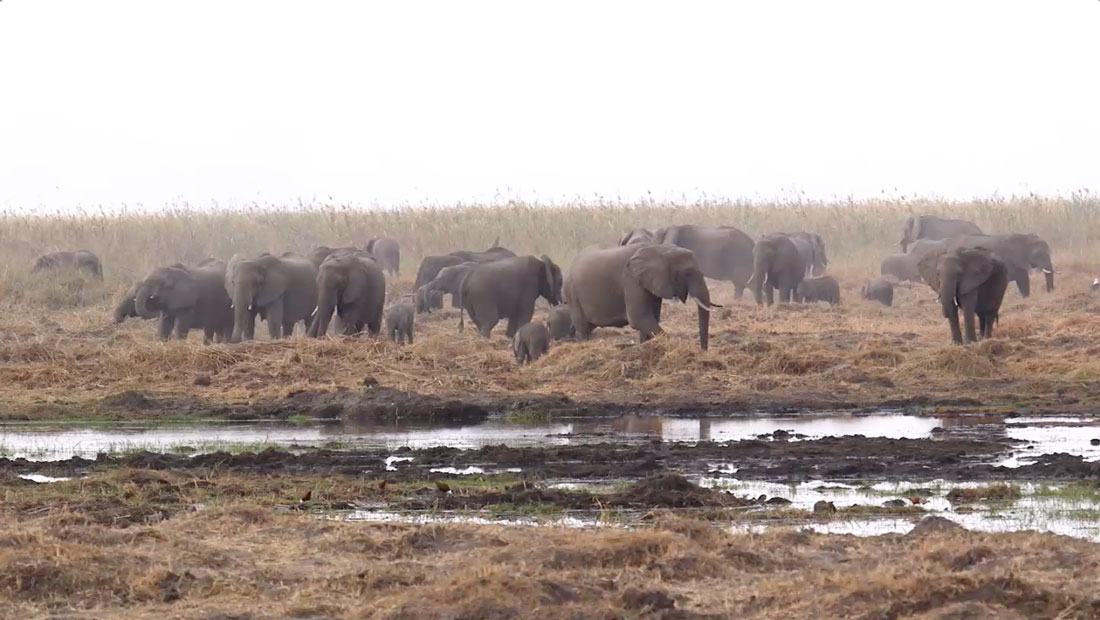 China Says It Will Phase Out Ivory Trade In 2017