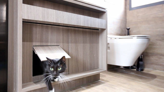 The best 100 absolutely ideas interior cat door image collections cat flats designing human apartments for feline friends cnn style absolutely ideas interior cat door planetlyrics Images