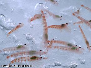 art.krill2.jpg
