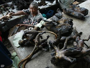 Some of the deadliest viruses in the world come from this 'Bush Meat', but it still remains a necessary part of the diet in Cameroon.