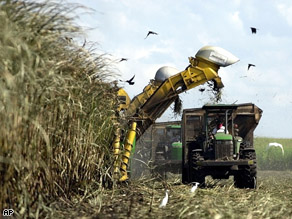 A U.S. Sugar Corp. mechanical harvester cuts sugar cane in a field outside of Clewiston, Fla., Nov. 2001.