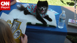 Minnie, an 8-year-old pomeranian therapy dog, listens as a child reads aloud.