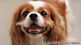 Colbert Puppy