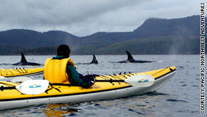 Kayakers may see pods of orcas in British Columbia's Johnstone Strait.
