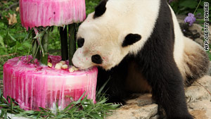 Tai Shan celebrates his fourth birthday in July with cake made of bamboo and shredded beets at Washington's National Zoo.