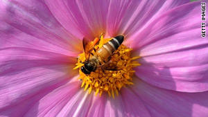 Bees pollinate a third of our crops around the world
