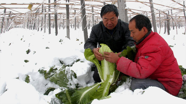 Chinese farmers try to salvage their crops after their greenhouse collapsed in in Xingtai, Hebei province, Thursday.