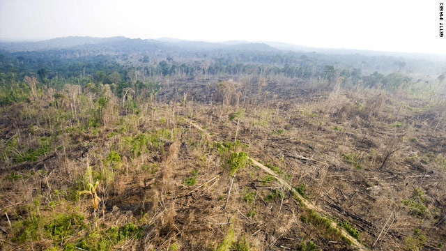 Deforestation is a major issue for developing nations in the fight against climate change.