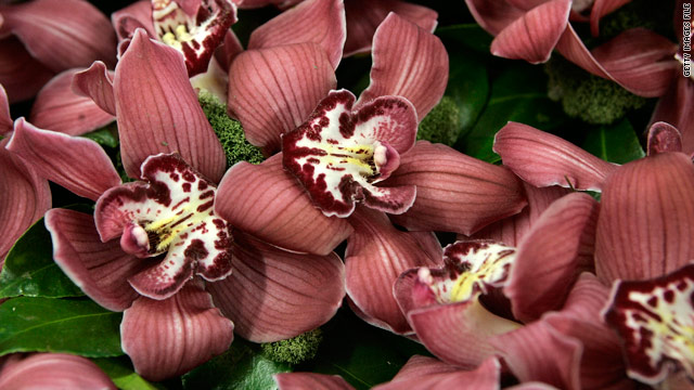 Nervous wedding planners in the U.S. who can't get Cymbidium Orchids from Dutch suppliers due to volcano-related delays are turning to growers in New Zealand.