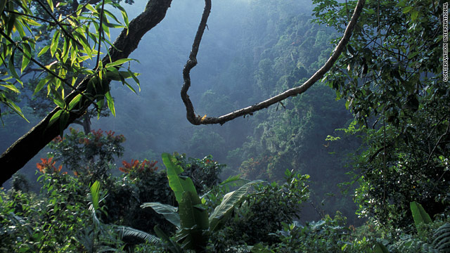 The forests of Java and other biodiversity hotspots can have an economic benefit in their preservation.