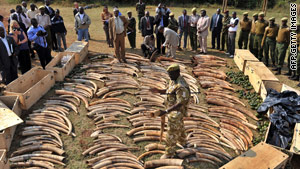 A Kenya wildlife official on Monday displays elephant ivory seized at the capital's Jomo Kenyatta International Airport.