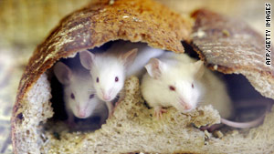 A CDC doctor says the results linking a mouse virus to chronic fatigue syndrome raise questions.