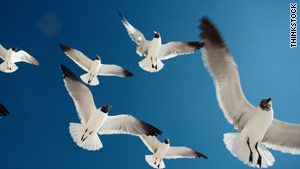 Birds don't crash into one another while flying in flocks.