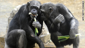 These two chimps may be exchanging diet tips.