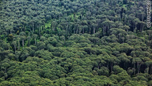 Russia-size forests 'could be restored'
