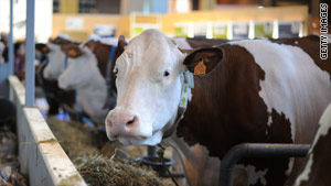 Does the mega-dairy plan sour the debate over farming practices?