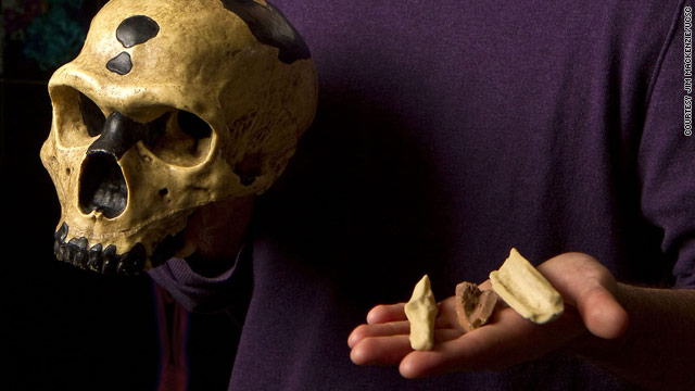 Replicas of the bones from which Neanderthal DNA was extracted are shown with a Neanderthal skull.