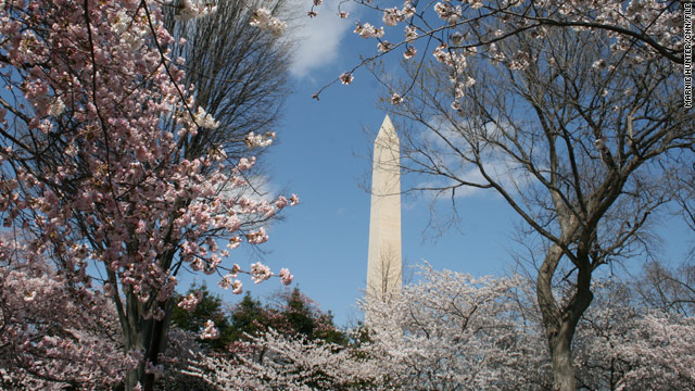 Check out Washington, D.C.'s cherry blossoms during the week to dodge big crowds.