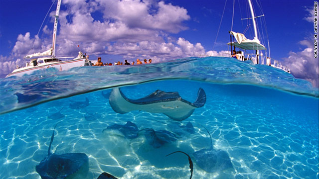 Grand Cayman's Stingray City is a great attraction for families headed to the Caribbean.