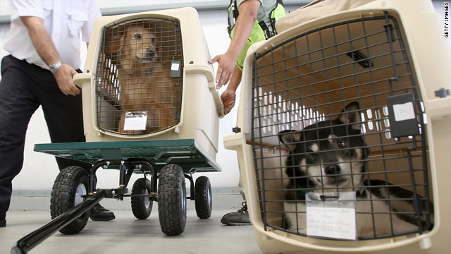 A secure carrier is key to safe air travel for pets.