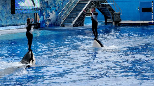 Trainers at SeaWorld are taught to reinforce the whales' good behavior with rewards and to not react at all to bad behavior.