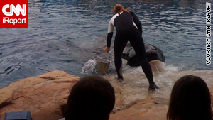 Trainer Dawn Brancheau interacts with a killer whale before Wednesday's accident at SeaWorld.