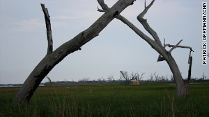 "Erosion and oil company trenches have ravaged Pointe Aux Chenes, or ""Oak Point."" Saltwater has killed many oak trees."