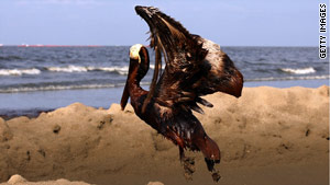 A brown pelican coated in oil tries to take flight in East Grand Terre Island, Louisiana,  on June 4.