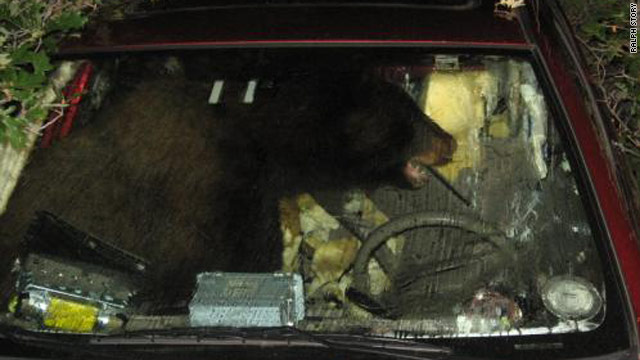 A Colorado man says a bear got into his car and took it on a short joyride before trashing the car's interior.