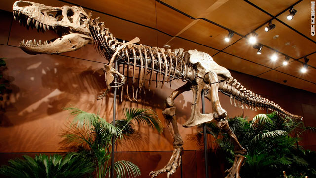 "T. rex, known for ""puncture and pull"" feeding, left discernible marks in the bones of its prey."