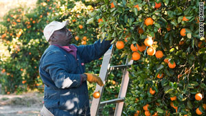 Florida citrus crops should get a break soon, with temperatures forecast to rise this week.