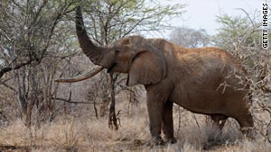An elephant in Kenya trampled and killed an American woman and her baby daughter, a wildlife spokeswoman said.