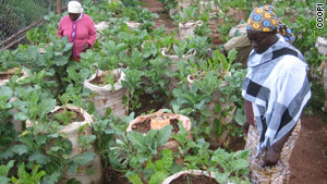 Nairobi's poor working on a mini-farm where the vegetables come in sacks.
