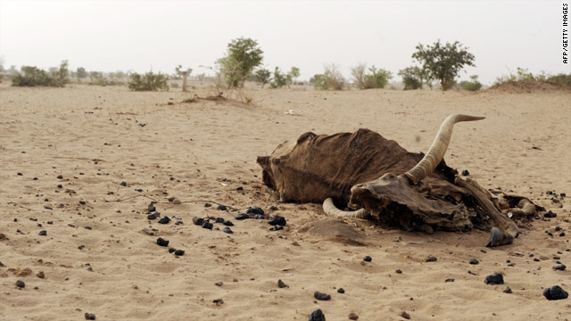 A bull carcass is evidence of Niger's food shortages.