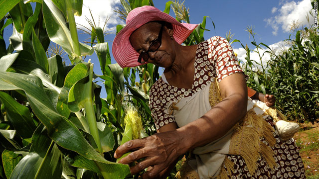 Prioritizing agriculture could make Africa a food exporter, according to a new study.