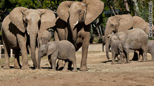 Researchers have discovered that Africa elephants are two distinct species.