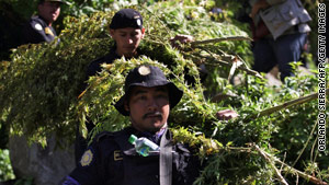 Marijuana cultivation increased significantly in Mexico despite the government's push against the drug cartels.