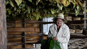 Plantation director Maria Luisa Alvarez with tobacco leaves hanging above her in a drying room.
