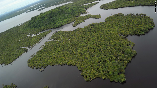 A mangrove forest at the Danau Sentarum National Park in West Kalimantan on Indonesian Borneo island.