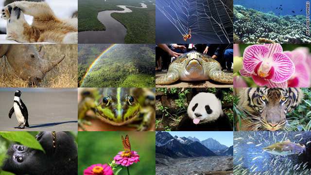 The U.N.'s biodiversity summit in Nagoya, Japan will set global targets for governments worldwide to protect ecosystems.