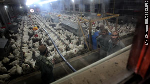 Workers inspect chickens at a poultry farm funded by the U.S. Agency for International Development in Afghanistan.