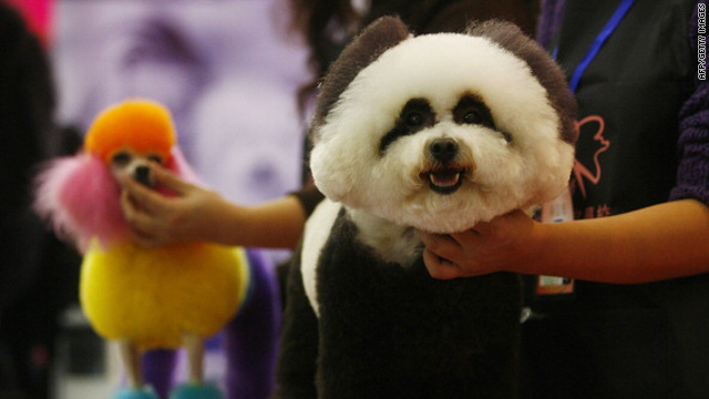 A dog accompanied by its owner prepares to take part in a pet beauty show during the sixth China Pet Fair in Wuhan in China's Hubei province on November 5.