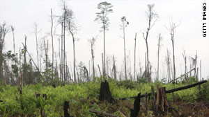 Indonesia hope to save forests