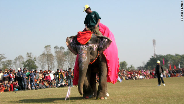 Winner Chanchalkali struts before the crowd during Nepal's Elephant Beauty Pageant, part of the Chitwan Elephant Festival.