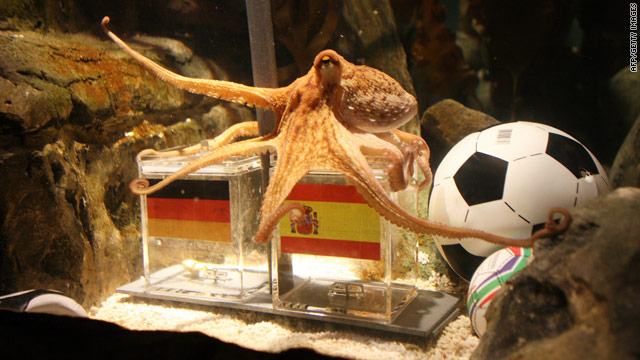 Paul the Octopus settles on a box of food bearing the Spanish flag.