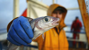 In the field: Fishing for a 'frozen ark'