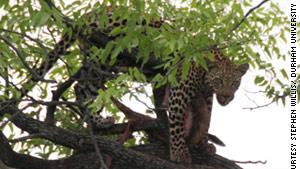 Why big predators struggle to survive