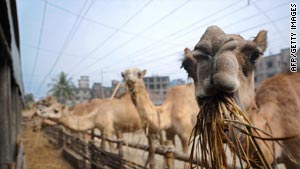 Camel meat has, for centuries, been a feature of traditional nomad cooking. Now, it has been given a 21st century twist.