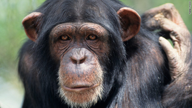 Scientists are seeking to understand the underlying reasons why humans and chimpanzees have key differences.